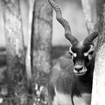 4 Ways You Could Help Conservation by Photographing Nature in Black & White!
