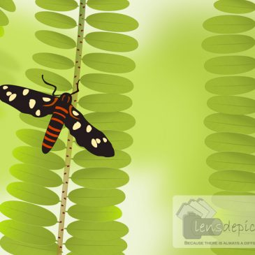 Butterfly in woods – Vector inspired from a photo!