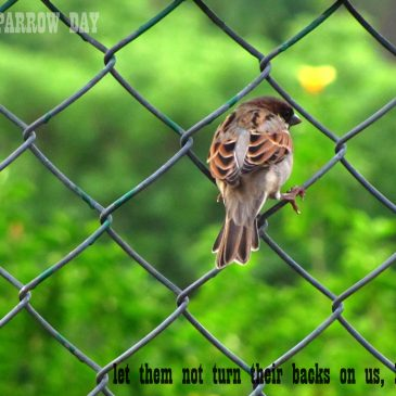 World Sparrow Day- Spread the word!