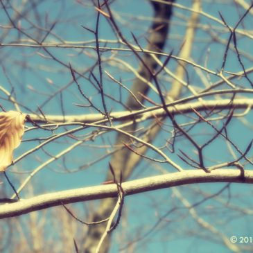 Your soul is rooting for you – Tale of a dying winter leaf!