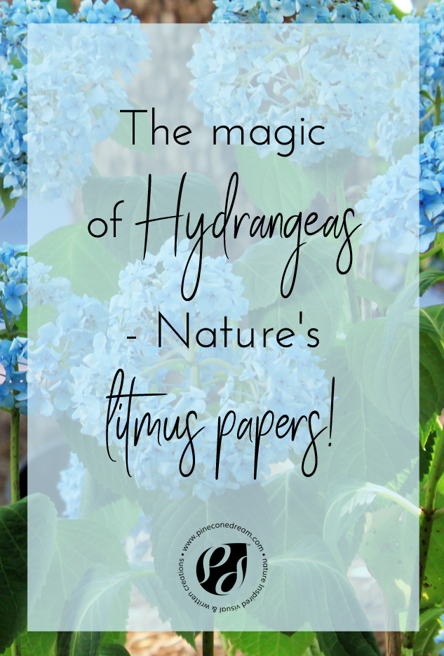 Hydrangeas_pcd