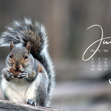 4 sweetest things about squirrels you didn't know even if you love them! + June 2018 wallpapers/calendars!