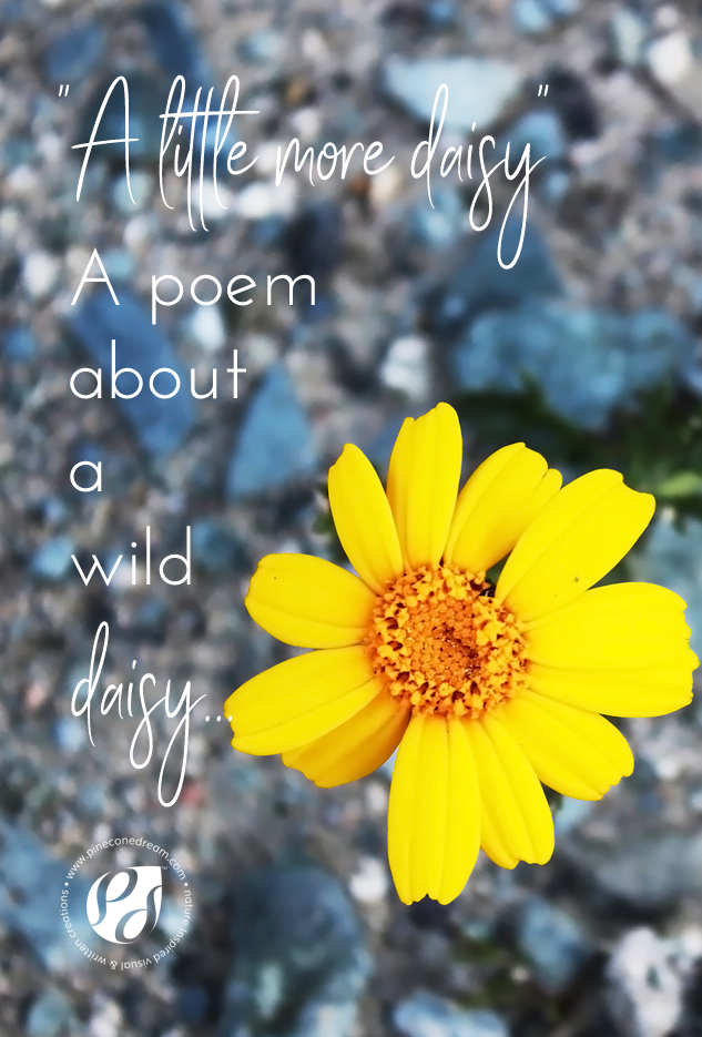 wilddaisypoem_pineconedream5