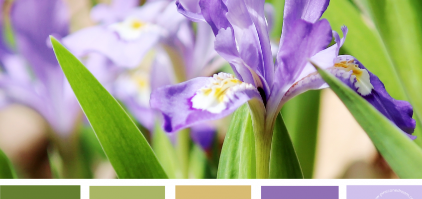 Iris inspired color palette, pastel scheme