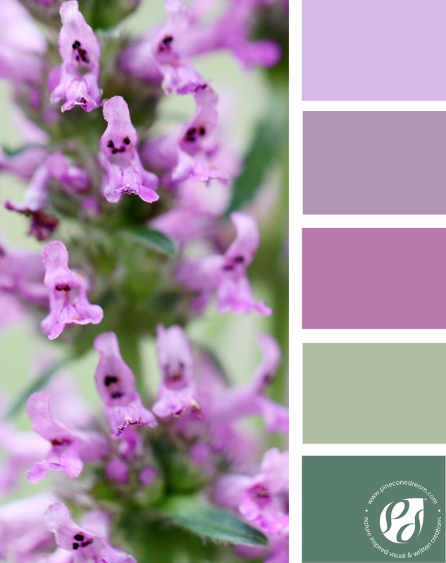 Color-palette-from-photos_purplepetals_pineconedream2