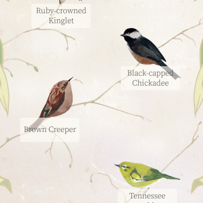 Dawn chorus app for smartphone