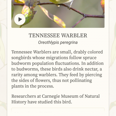Dawn chorus app review
