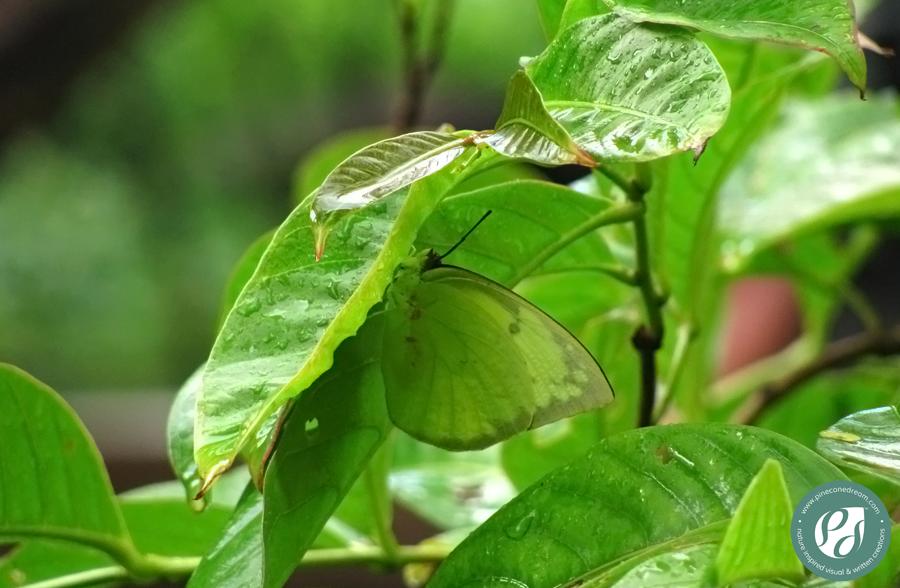 GreenButterfly_PCD