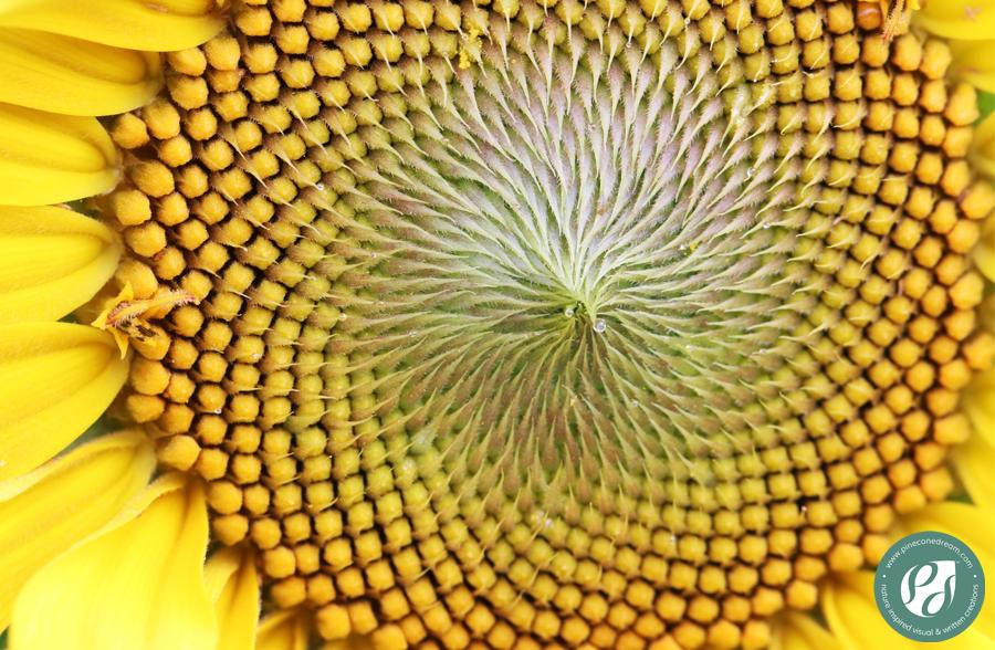 Sunflower_PCD