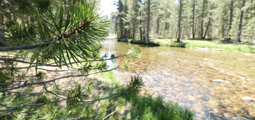 Water stream at John Muir Trail