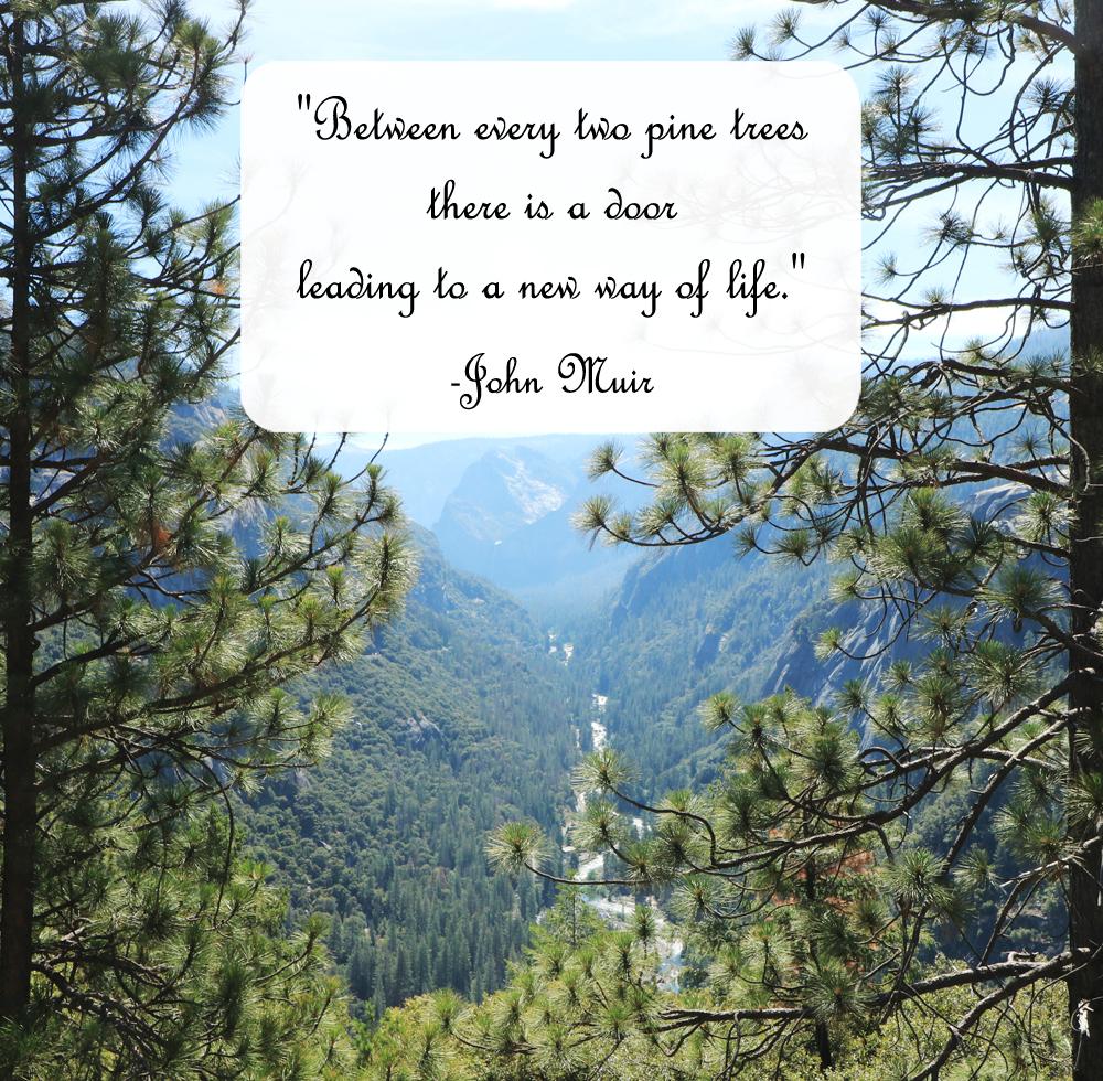 John Muir Pines Quote Photo Copyright ©2019 Gyaneshwari Dave