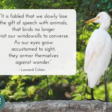 World Environment Day & Our Lost Sense Of Wonder For Nature